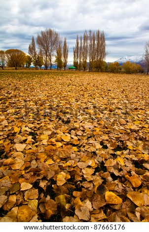Wide angle view of field covered in fall leaves