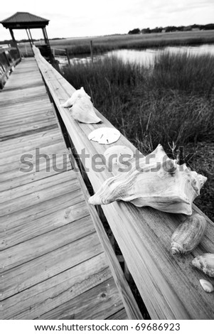 Wide angle view of various sea shells on wooden dock leading to saltwater creek. Charleston, South Carolina. - stock photo