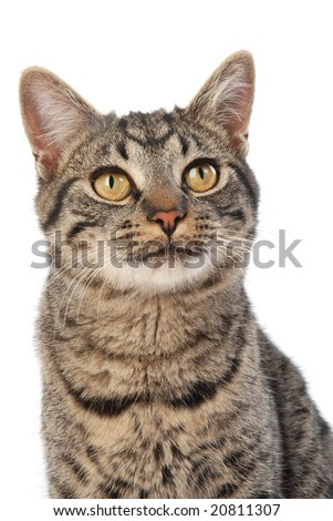 Wide eyed curious happy cat. - stock photo