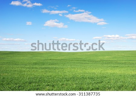 Wide field and blue sky - stock photo