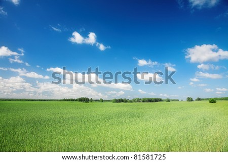 wide green agricultural field under blue sky - stock photo