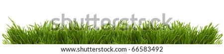 Wide image of a fresh green spring grass on a white background isolated - stock photo