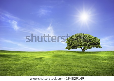 Wide meadow with tree and clouds in blue sky in sunny day - stock photo