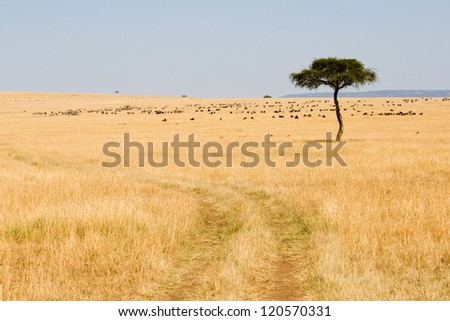 Wide Savannah in Masai Mara National Reserve, Kenya - stock photo