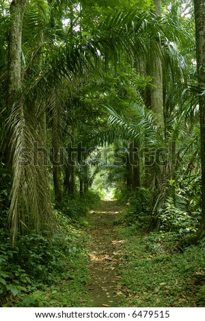 wide shot photo of a walking path in the tropical forest or jungle or rainforest - stock photo
