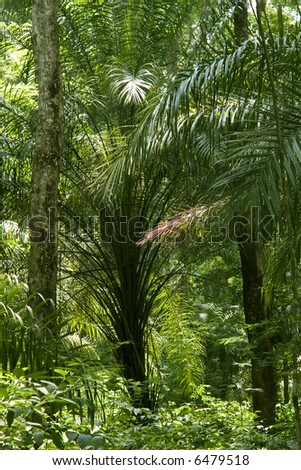 wide shot photo of in the tropical forest or jungle or rainforest - stock photo