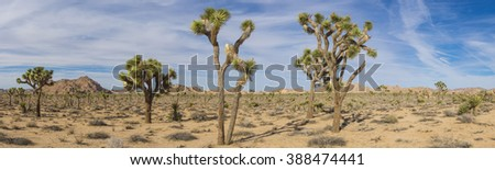 Wide view Joshua Tree National Park plants extend into the far distance. - stock photo