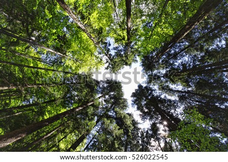 wide view of forest