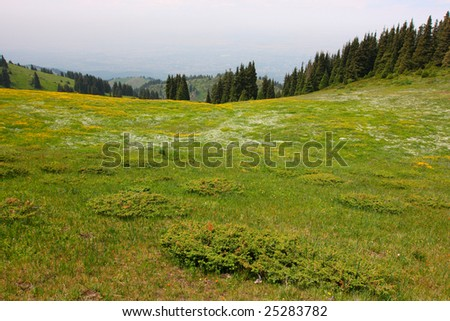 Wide view of the alpine meadows high in the mountains - stock photo
