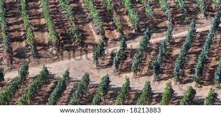 Wide view of the world famous vineyards of Porto wine. Panoramic picture,not a crop. - stock photo