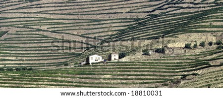 Wide view of the world famous vineyards of Porto wine. Panoramic picture,not a crop - stock photo