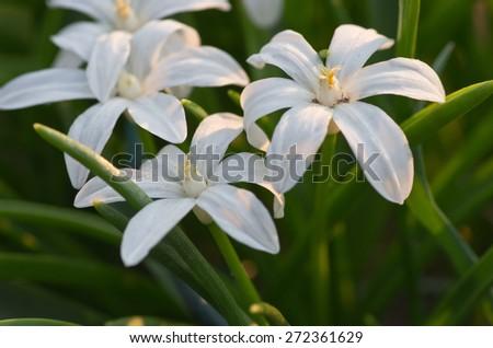 wihte flowers - stock photo