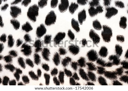 Wild African animal hide pattern white leopard - stock photo
