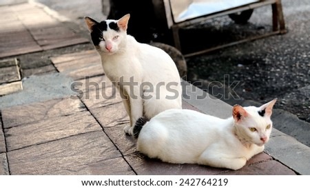 Wild alley cat defending its food in the street - stock photo
