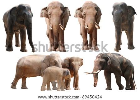 wild animal elephant set collection - stock photo