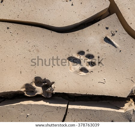 Wild animal paw print mark in the mud. - stock photo