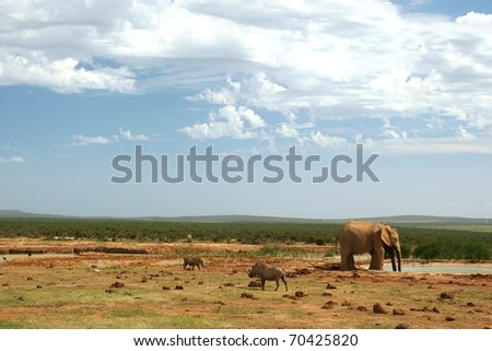 Wild animals at a waterhole in Addo, South Africa