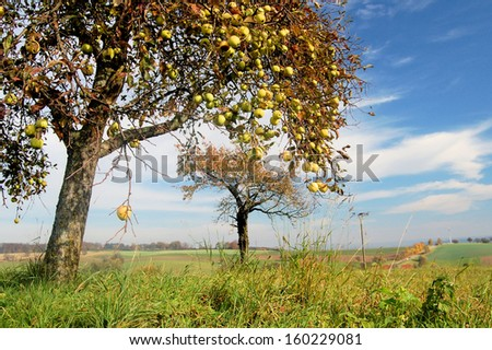 Wild apple trees in a rural landscape - stock photo