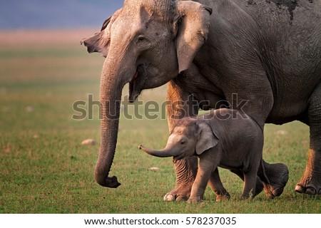 elephant stock images royalty free images vectors shutterstock. Black Bedroom Furniture Sets. Home Design Ideas