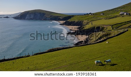 Wild Atlantic Way Coast, County Kerry(south west)Typical Irish Landscape, one of the most popular holiday tourist travel destinations in Ireland. Classic beautiful postcard View of Dingle bay, sheep - stock photo