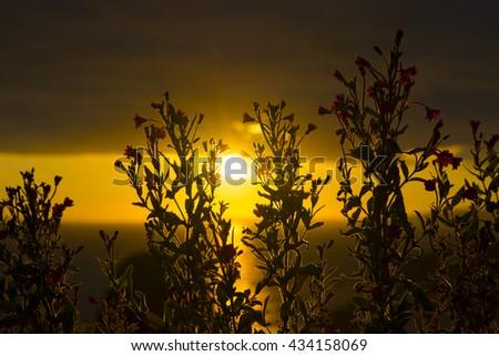 wild atlantic way sunset through wild flowers on the coastline of ballybunion county kerry ireland - stock photo