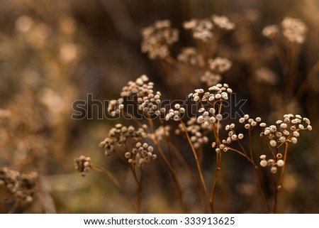 Wild autumn flowers close up - stock photo