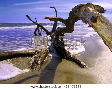 wild beach, USA - stock photo