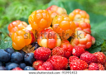 Wild berries on a green vegetative background in wood - stock photo