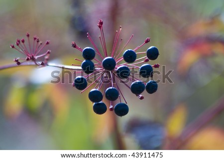 Wild berries on branch
