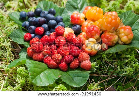 Wild berries on green leaves - stock photo