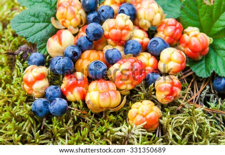 Wild berries on the moss closeup. Fresh wild fruits - stock photo