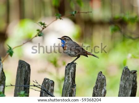 Wild bird in a natural habitat. Wildlife Photography. - stock photo