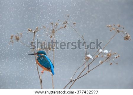 wild bird in natural habitat, nature series - stock photo