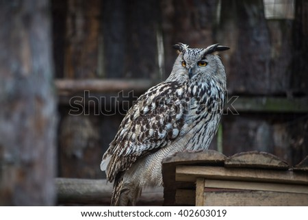 Wild birds. Owl. Excellent quality and color. - stock photo