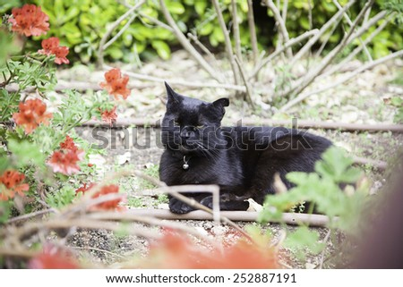 Wild black cat, detail of a pet resting - stock photo