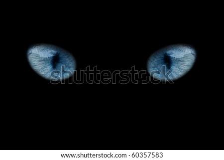 wild blue eyes isolated on black - stock photo