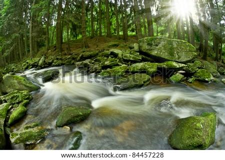 wild brook - stock photo