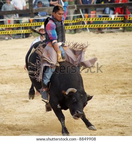 Wild Bull Ride - stock photo