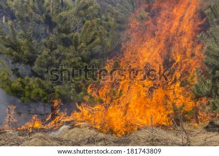 Wild bush vegetation in fire - stock photo