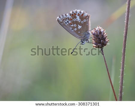 Wild Butterfly in Bavaria, Germany on a warm summer evening. Wildlife Macro with very Shallow Depth of Field