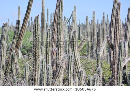 Wild Cactus field - stock photo