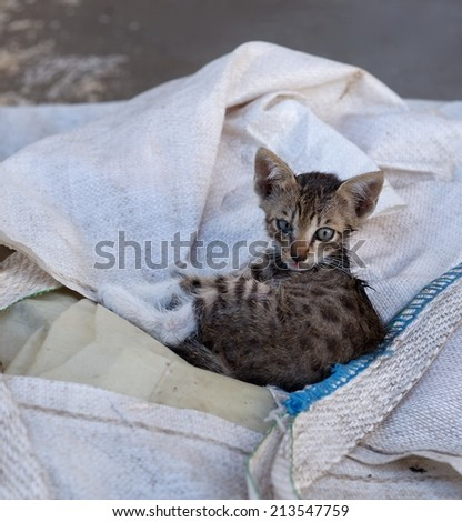 Wild cat in natural background, small little cat in the street, social issue, cat in the street, little kitten, small cat looking straight to the camera