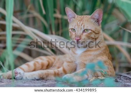 wild cat lives in the forest.