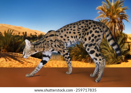 wild cat on the background of the desert and the oasis - stock photo
