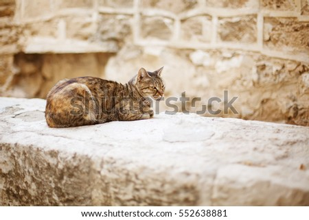 Wild city cat sitting on a stone wall in old town