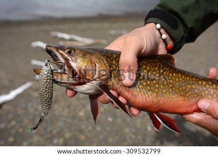 Wild colorful trout in the hands of fisherman, Patagonia, Chile - stock photo