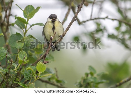 Wild cute bird on tree is singing