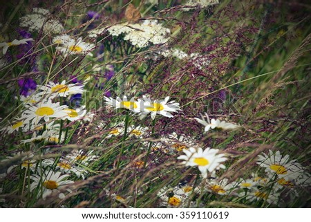 wild daisies in the field, instagram vintage effect - stock photo