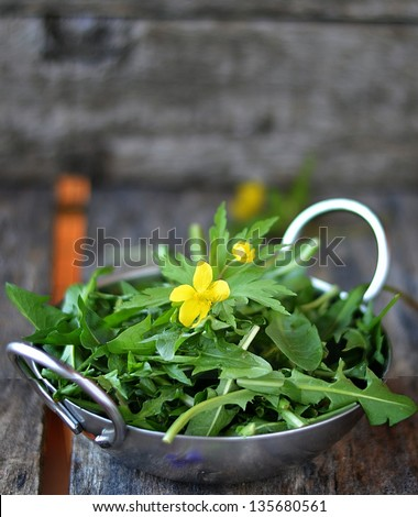 wild dandelion leaf in to the metallic bowl - stock photo