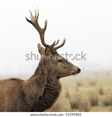 wild deer in forest with morning fog in winter - stock photo